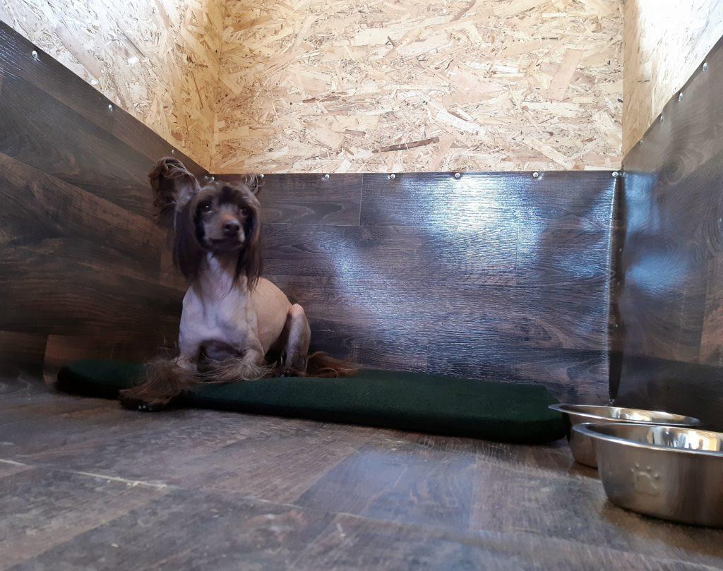 Зоогостиница для собак Ломоносовский район