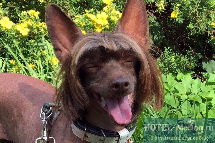 Где оставить собаку в СПб