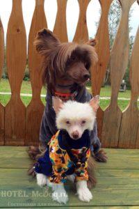 Зоогостиница, передержка для собак в СПб