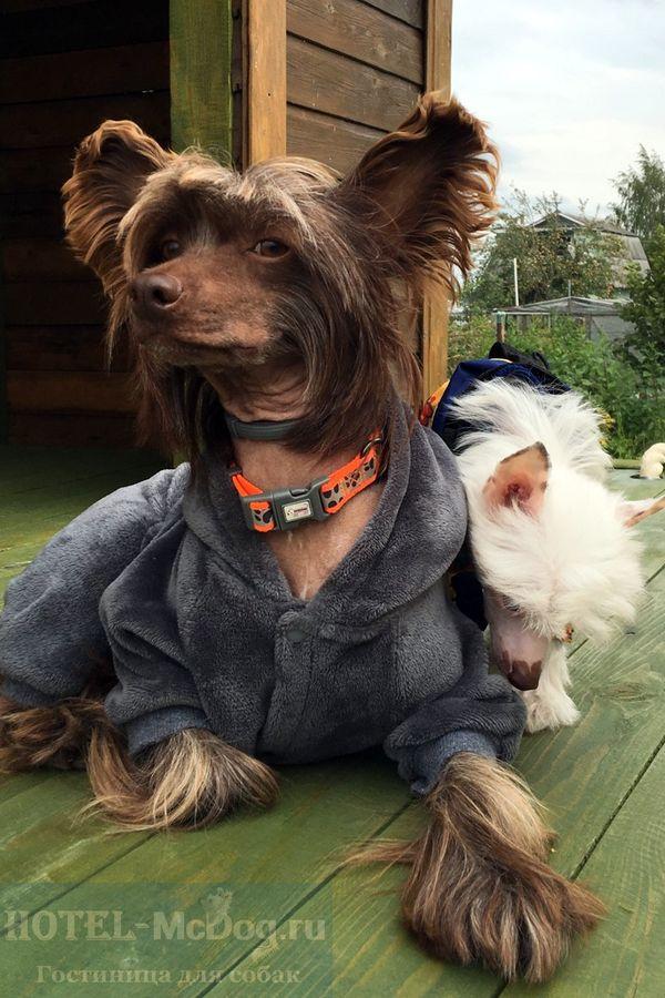 Гостиница для собак в СПб