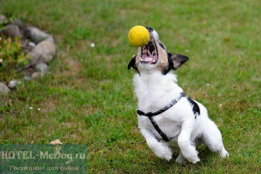 Передержка для собак Ломоносовский район